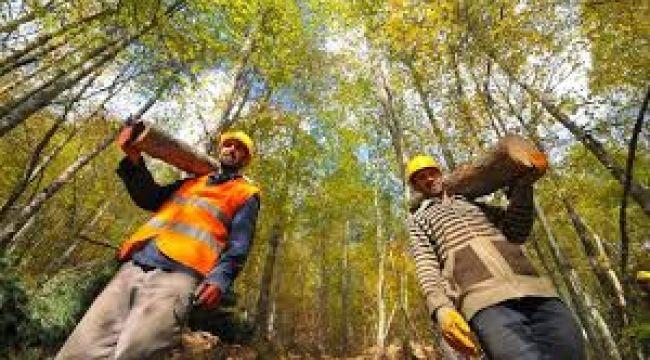 700 Ormancı Alınacak Orman Bakanlığı Kamu Haber