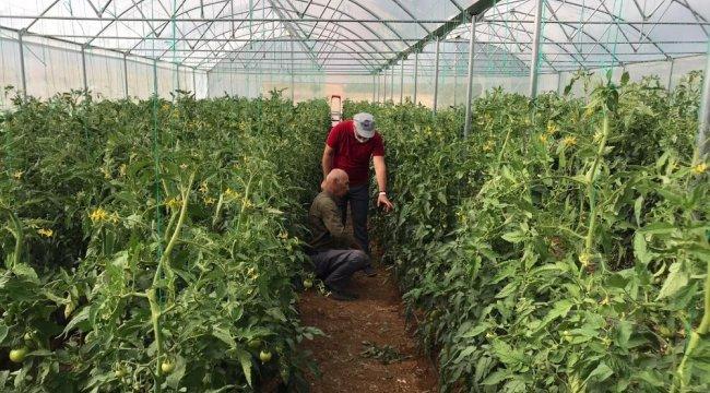 Konya'nın Hüyük ilçesinde, Tarım ve Orman Müdürlüğü tarafından kurulan ...