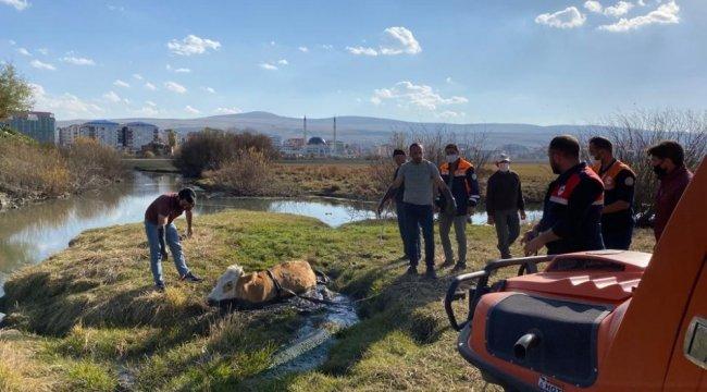 Ardahan'da Kura Nehri kenarındaki bataklığa saplanan inek, AFAD ekipler...