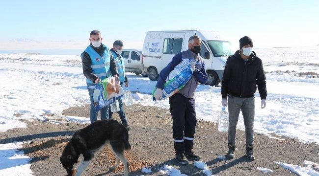 Erciş Vefa Sosyal Destek Grubu üyeleri, sokağa çıkma kısıtlamasında soğuk k...
