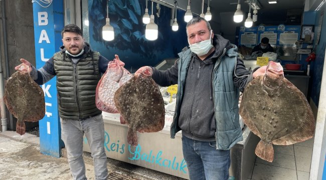 Ordu'nun Fatsa ve Perşembe ilçesi açıklarında yakalanan kalkan balıklar...