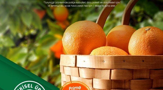 TARSİM, üreticilere turunçgil ürünlerini dolu, fırtına, hortum, yangın, hey...