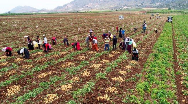 Türkiye'nin en önemli tarım üretim merkezlerinden Adana'da erkenci ...